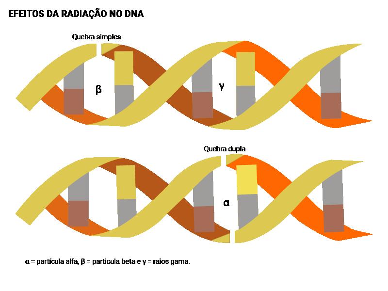 Infográfico dos efeitos da radiação no DNA
